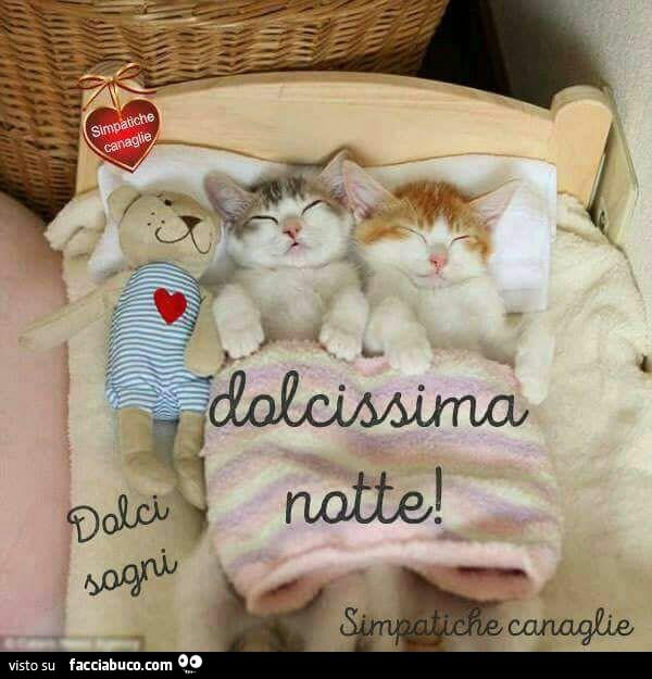 Dolcissima Notte Il Giulebbe