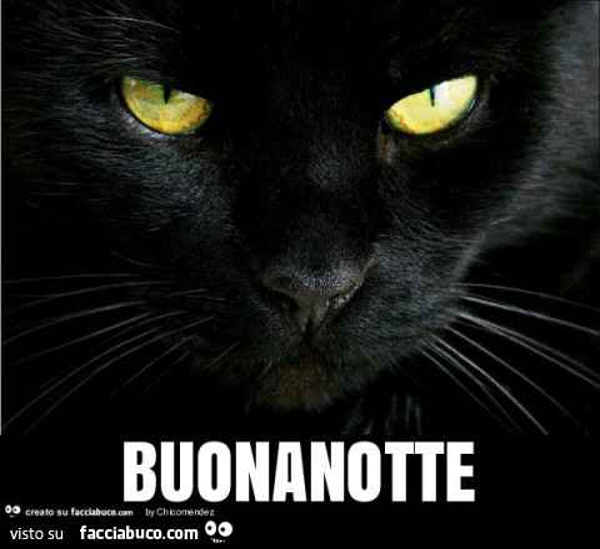 Gatto Nero Buonanotte Facciabuco Com